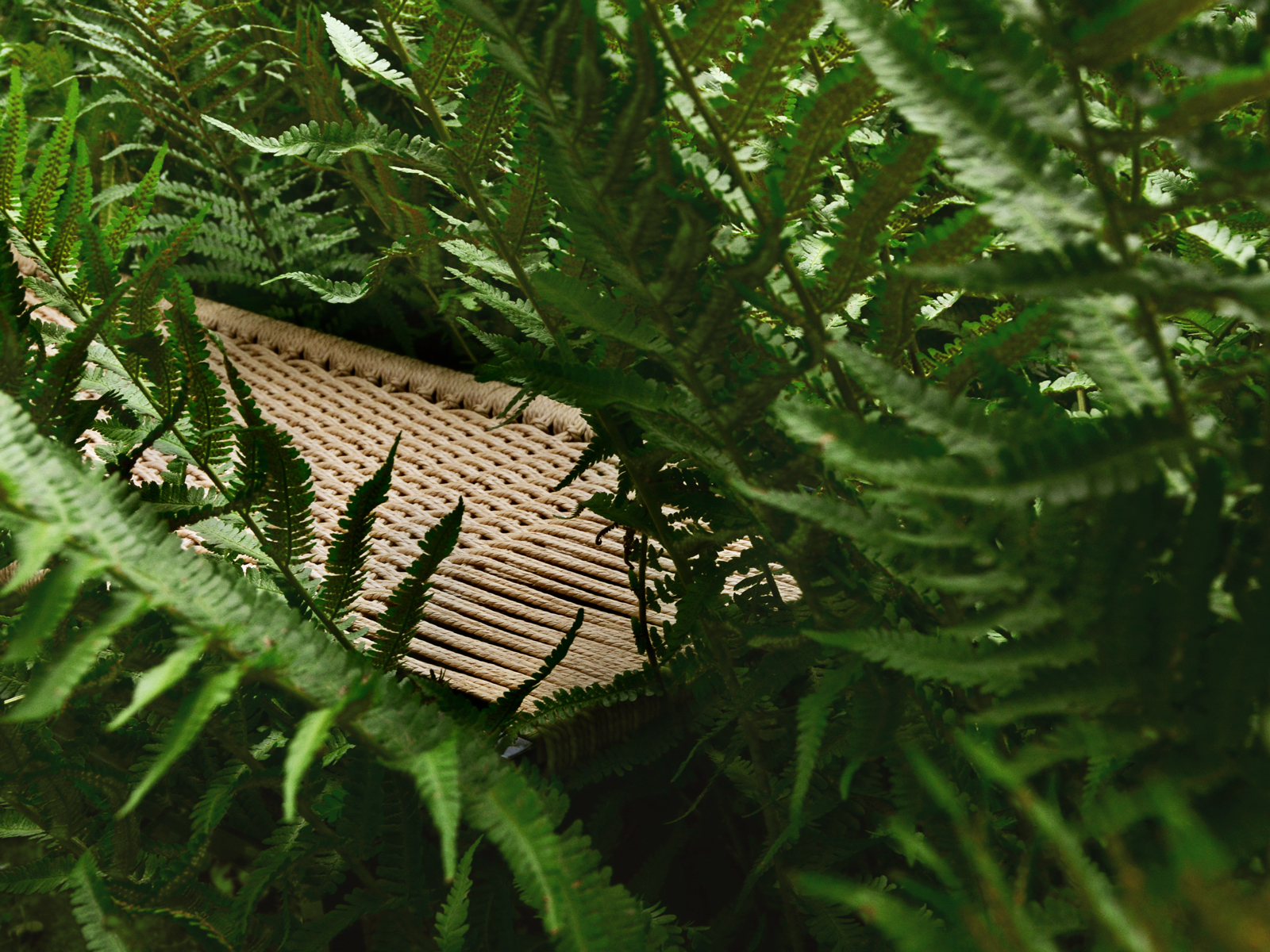 Das natürliche Material Danish Cord der Sitzfläche umgeben von Farn